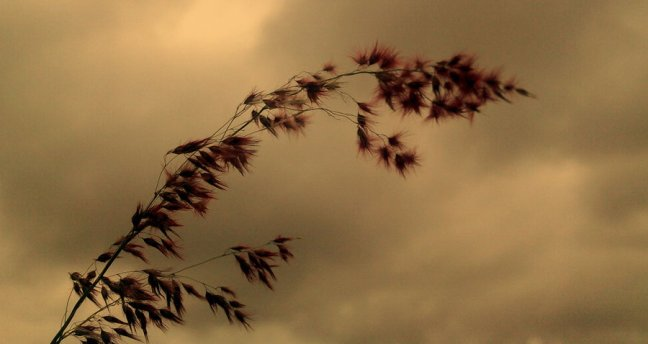 when_the_wild_wind_blows_by_siddharthnagarajan-d2ymz87